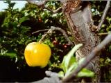 Uri grows his own fruit.
