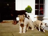 Some of Uri's faithful guard dogs.