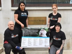 Petition Against Swedish University' Experiments on Monkeys