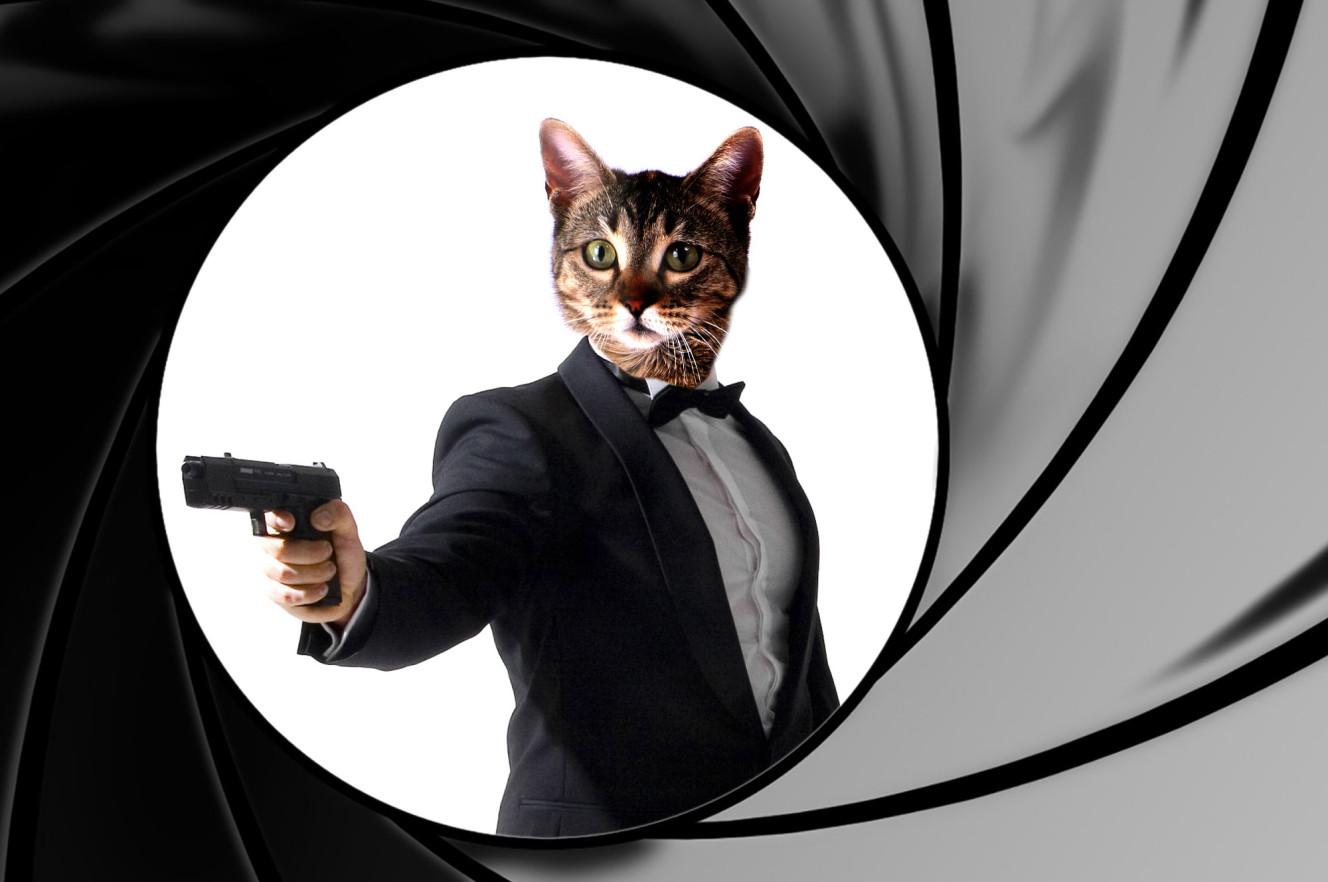 spy cats cia